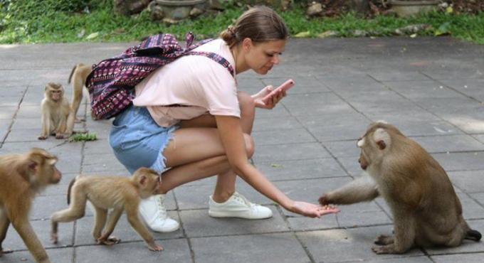 Les habitants de Phuket Town veulent conserver les singes à 'Monkey Hill'