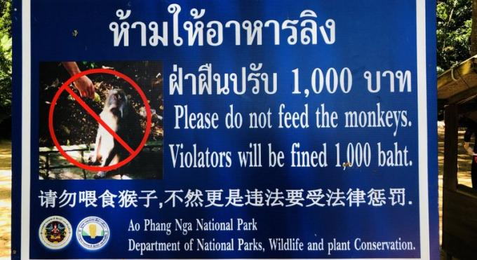 Le gouverneur de Phuket demande des panneaux de mise en garde contre les singes à l'attention des