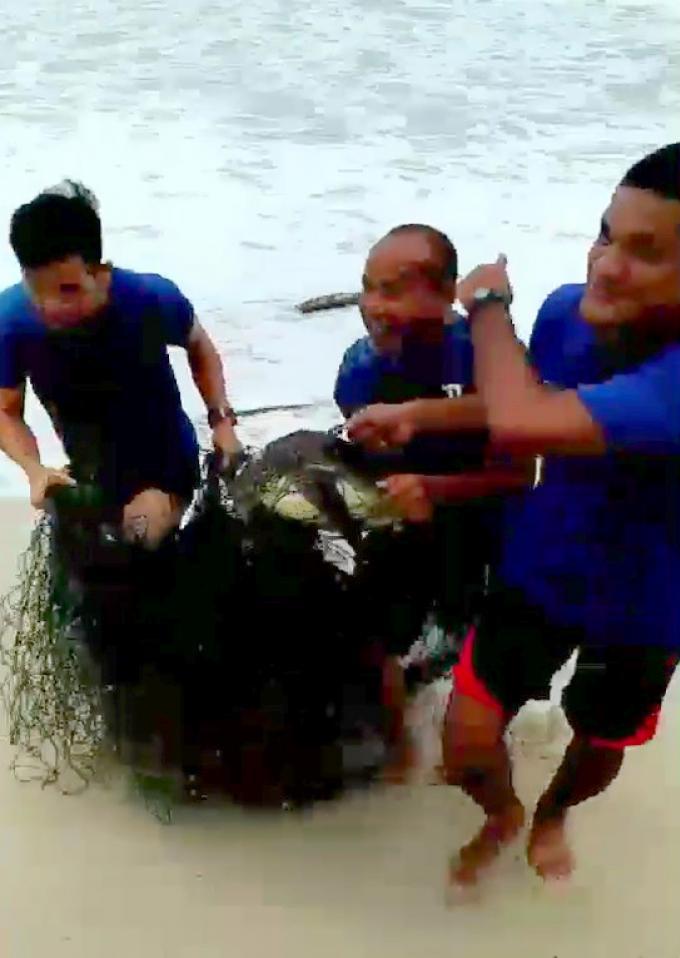 Des tortues sauvées de filets de pêche