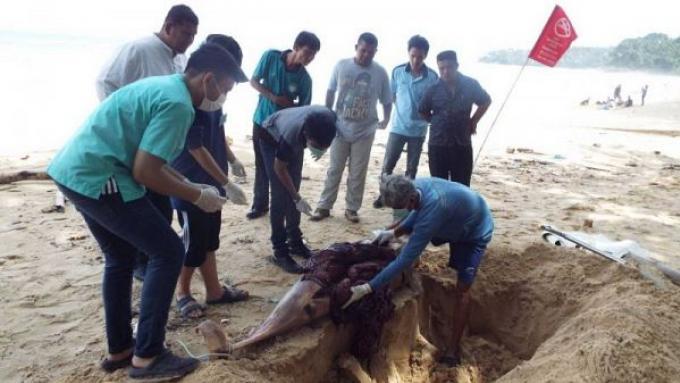 Un dauphin mort échoué sur une plage de Phuket