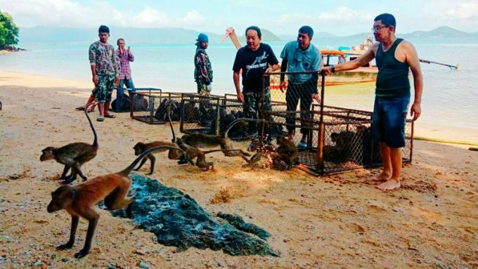 Les premiers singes arrivent à Koh Payu