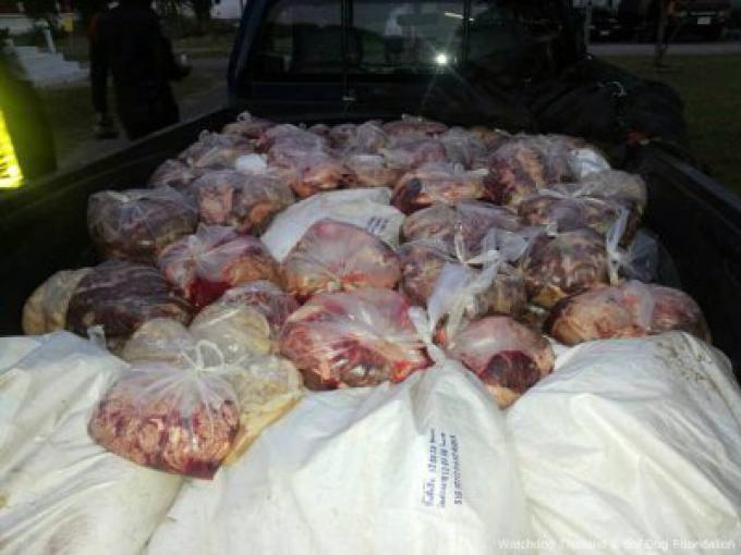Les policiers Thais découvrent un camion rempli de carcasses de chiens