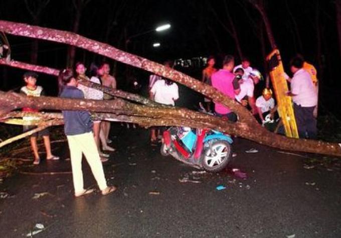 Un homme  est dans un état critique après avoir été frappé par un arbre qui est tombé