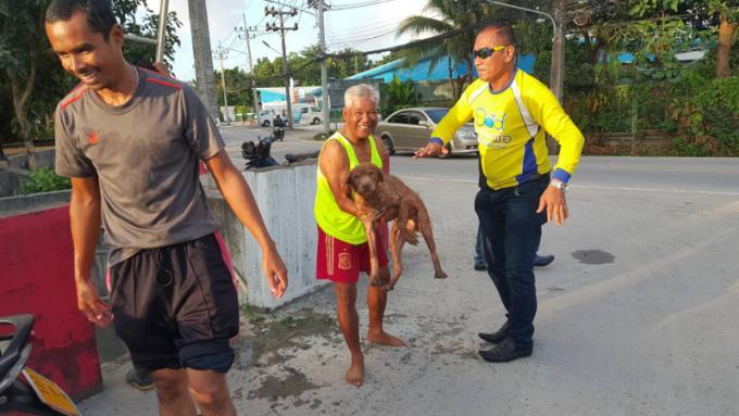 Un vieux chien secouru d'un canal de Chalong