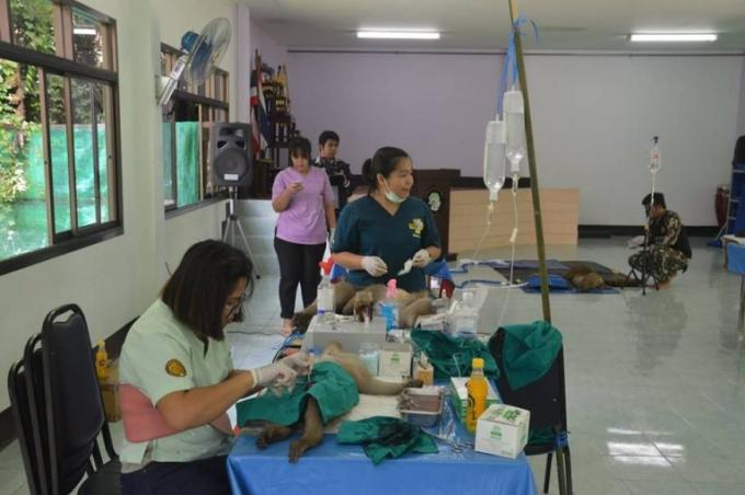 Stérilisation en cours