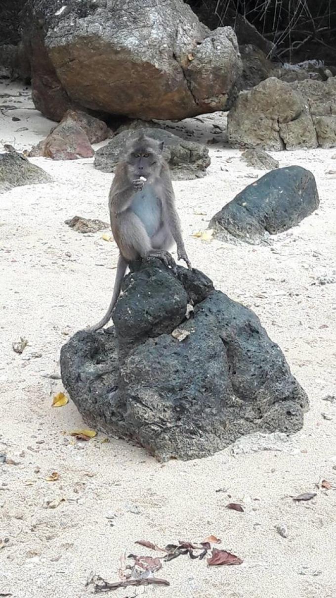 Livraison de fruits pour les macaques de Koh Payu