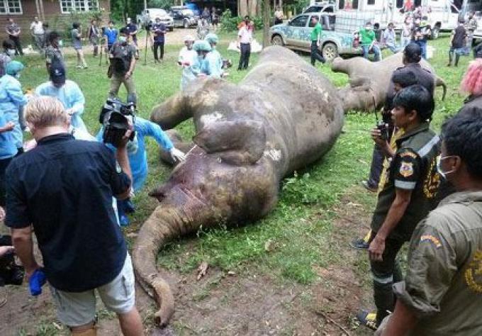 Les 3 éléphants morts, Le propriétaire du terrain inculpé