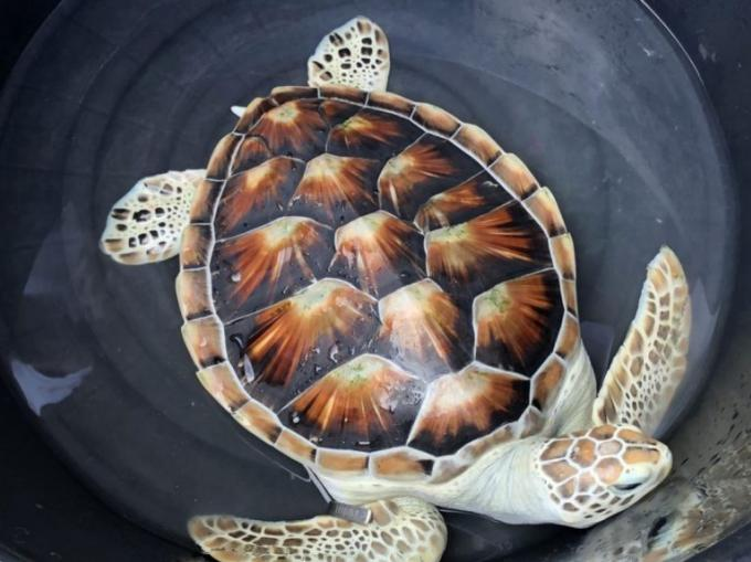 Boon Rawd – La tortue qui hésite