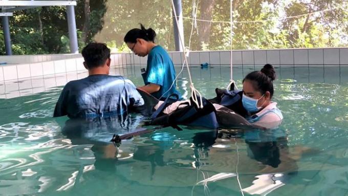 Après la mort du dauphin, les experts ont des doutes au sujet du 'plastique'