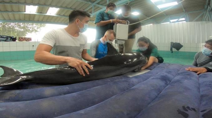 Le dauphin est mort de causes naturelles