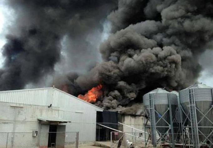 Le feu tue 58 000 poules dans une ferme d'oeufs