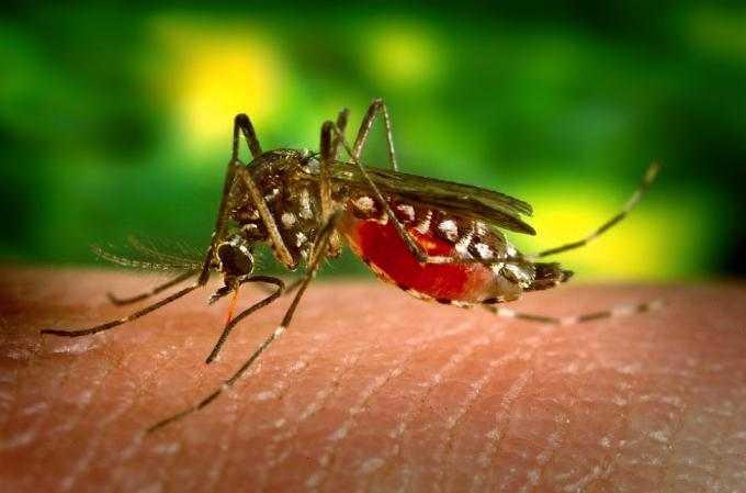 Les officiels de santé publique réitèrent leur avertissement contre les virus transmis par les mo