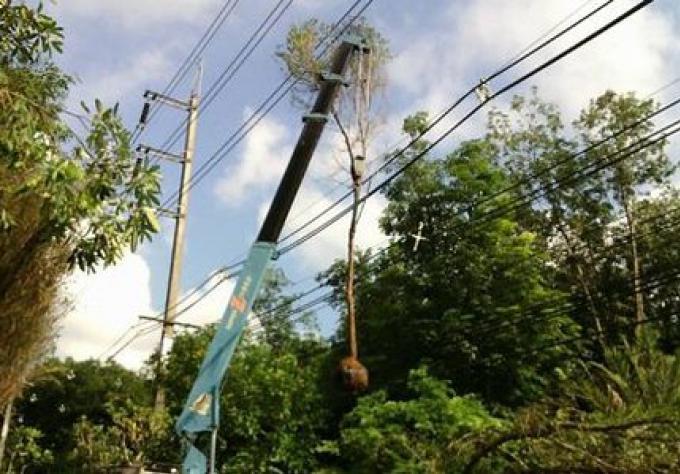 Un paysagiste de Phuket est mort, un autre est à l'hôpital après avoir été électrocutés