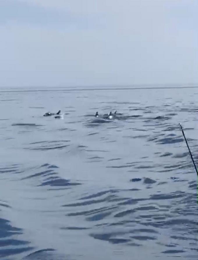 Un groupe d'une dizaine de dauphins aperçu au large de Phuket – Vidéo