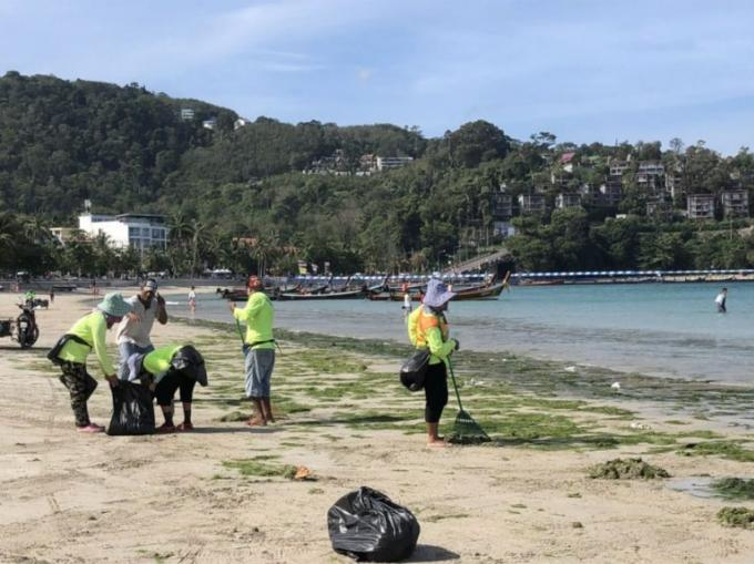 Des tonnes d'algues vertes s'échouent sur Patong Beach
