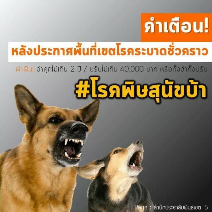 La Fondation Soi Dog répond à la zone d'épidémie de rage décrétée à Chalong