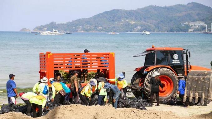 Les algues de Patong sont sans danger