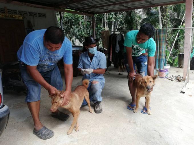 Un deuxième cas de rage constaté à Krabi