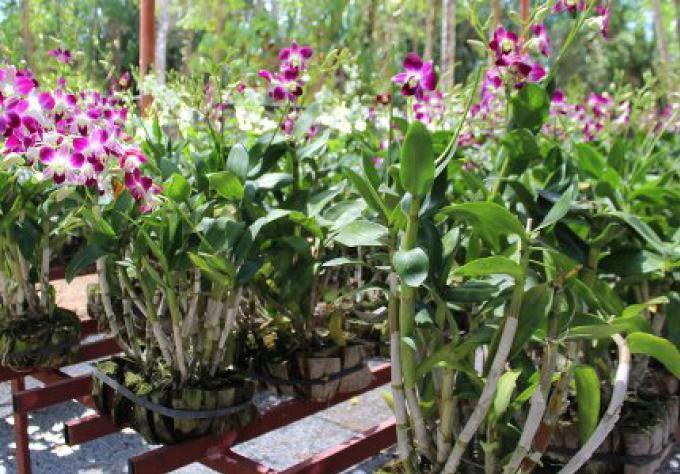 Pullman Khao Lak Katiliya Resort and Villas cultive chez lui