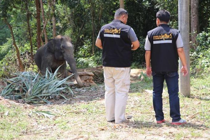 Le mahout inculpé après l'attaque d'éléphant qui a blessé deux italiens