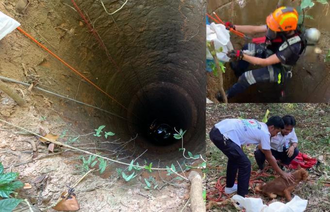 Un chien tombé dans un puits de 10 mètres secouru