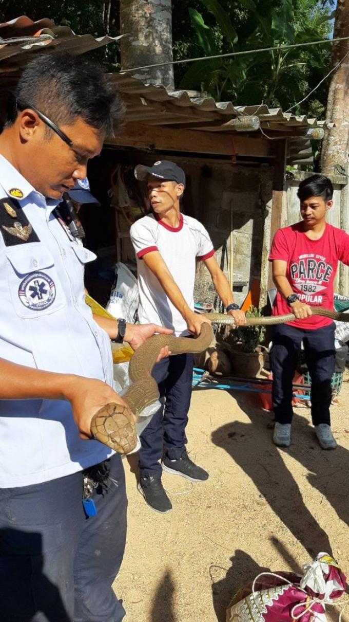 Deux nouveaux cobras capturés à Kathu – Vidéo