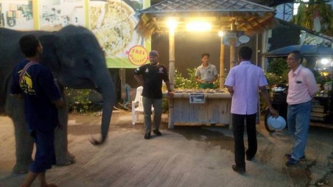 Les bébés éléphants d'un centre commercial soulèvent des inquiétudes