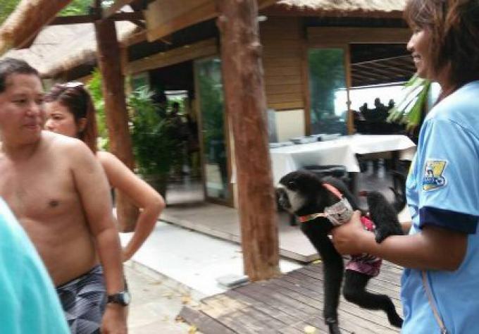 Les rabatteurs pour des photos avec des Gibbons découverts sur l'île Phi Phi