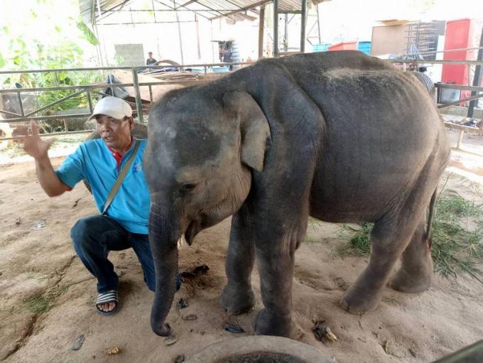 Le bébé éléphant du Zoo de Phuket en mauvaise santé