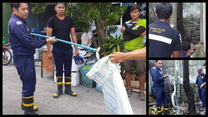 Un cobra royal capturé à Patong, 30 oeufs ont disparu du nid