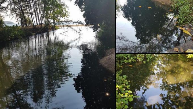 La pollution du canal de Nai Yang imputée aux habitants et aux hôtels