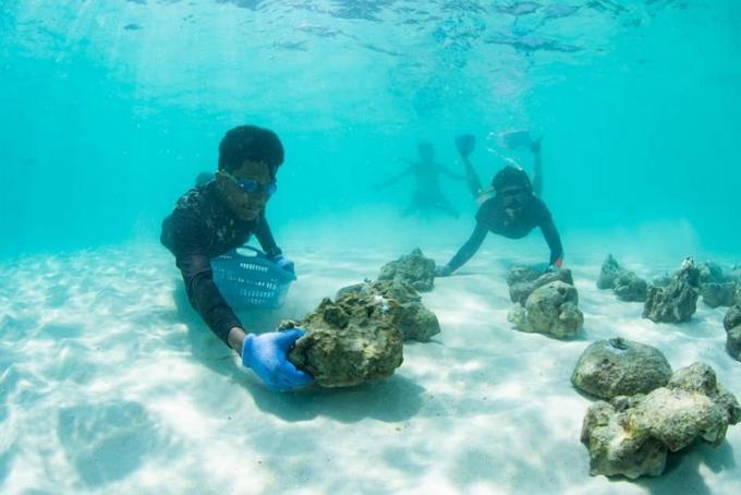 Des plongeurs étrangers volontaires pour un projet de restauration du corail à Maya Bay