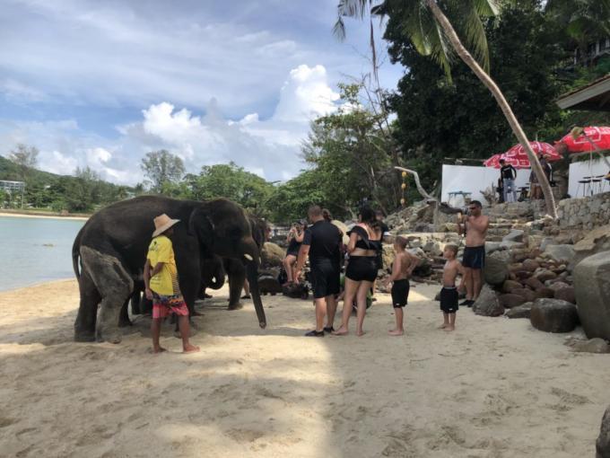 Enquête ouverte après des plaintes contre la présence d'éléphants sur une plage de Phuket