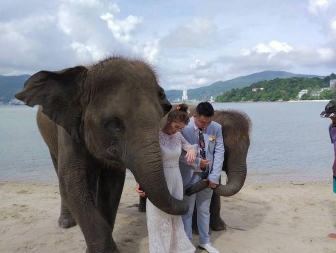 Photos avec les éléphants sur la plage, tout est en règle