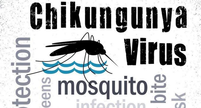 Alerte santé : Les cas de Chikungunya augmentent dans les provinces du sud