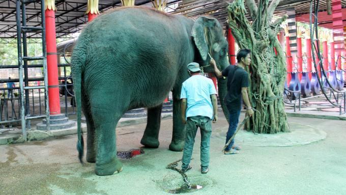 Pas de cruauté envers les animaux au Zoo de Phuket
