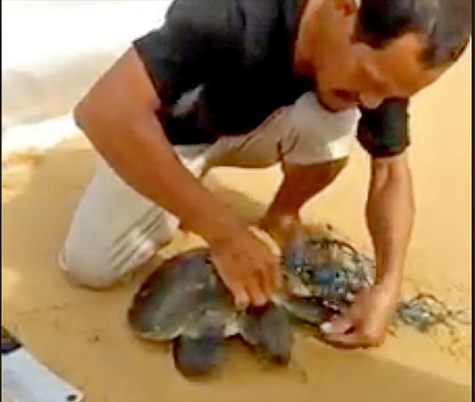 Un villageois de Phuket brave les vagues pour sauver une tortue