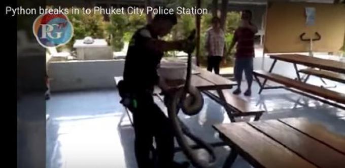 Vidéo: Un python de 20kg donne une frayeur dans un poste de police