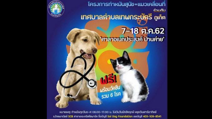 Soi Dog mène une campagne de stérilisation et de vaccination des chiens et chats de Thepkrasattri