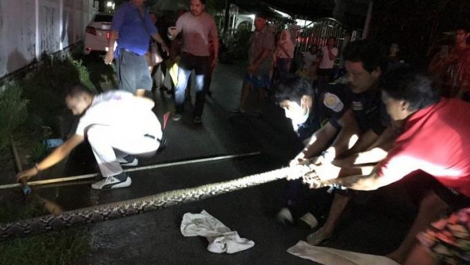 Les habitants donnent un coup de main pour capturer un python