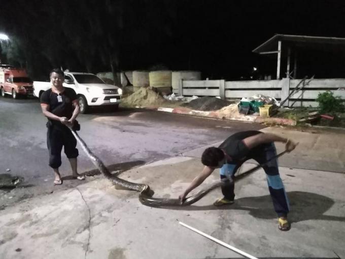 Un python de cinq mètres capturé à Wichit, plusieurs chats ont disparu
