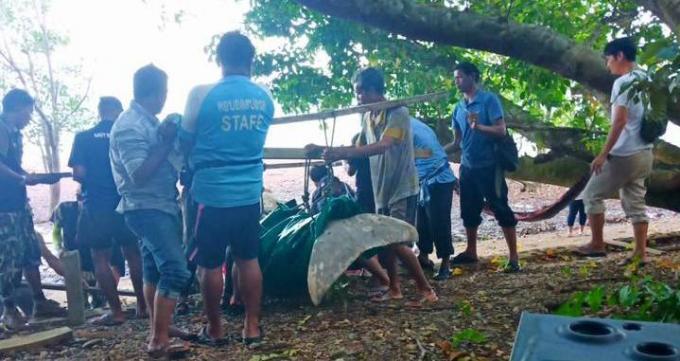 Un lamantin retrouvé échoué à Koh Lanta, le 23ème mort dans l'Andaman cette année