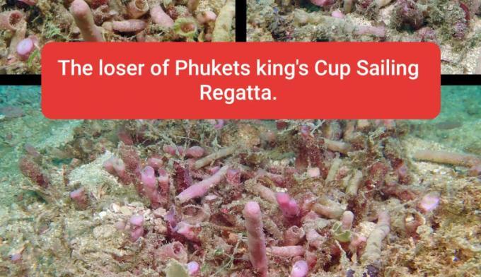 Phuket King's Cup Regatta refuse les accusations de destruction de corail à Kata