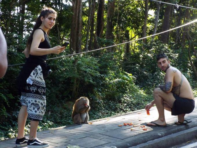 Plus de signalétique après l'attaque d'un touriste par un singe