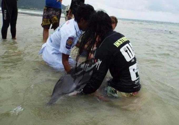 Un sac en plastique a peut être tué un dauphin, affirme un expert de Phuket
