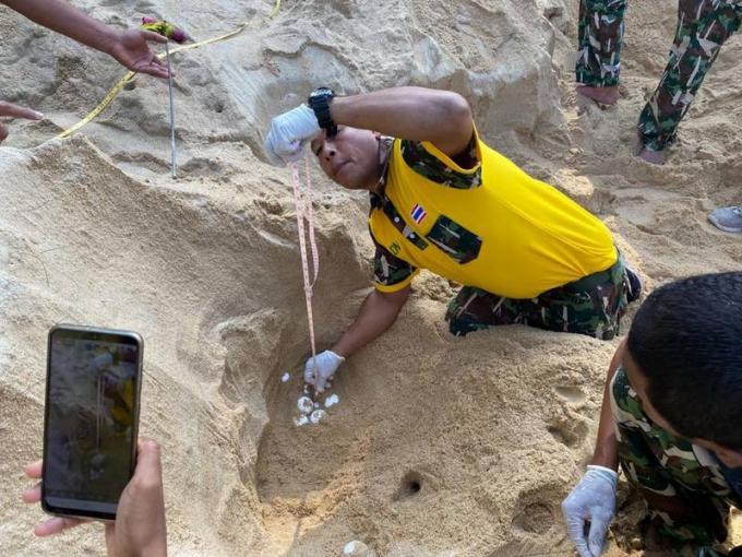 Un nid de tortue découvert sur Sai Kaew Beach