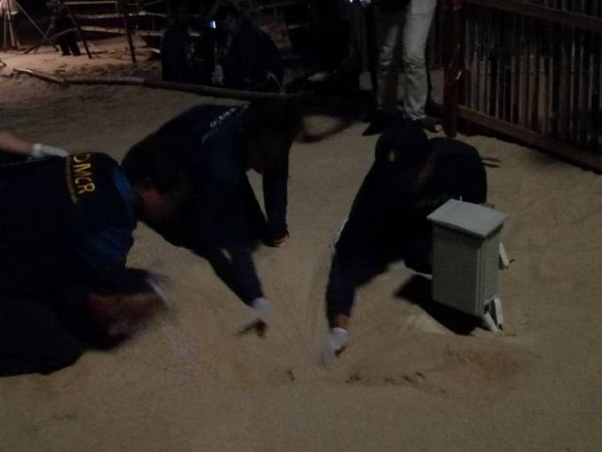 D'autres bébés tortue naissent à Thai Muang