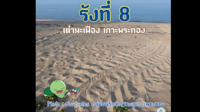 Des traces de tortue découvertes à Koh Phra Thong