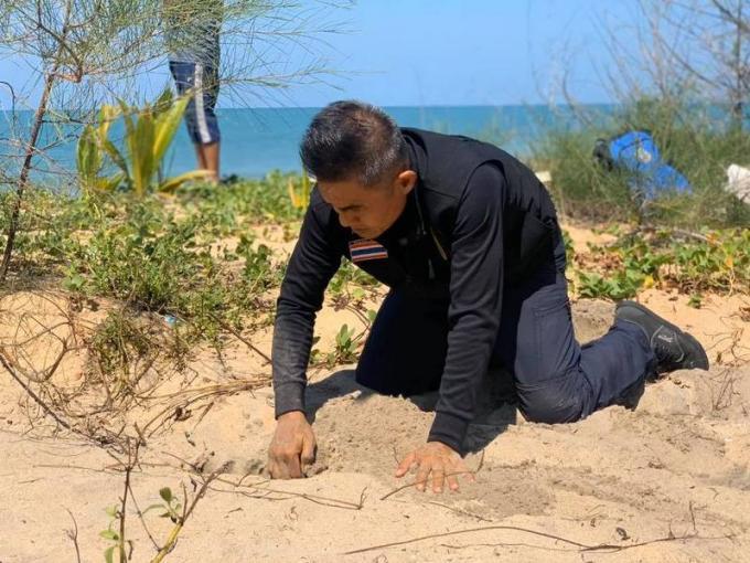 Des traces de tortue sur Koh Phra Thong, mais pas de nid