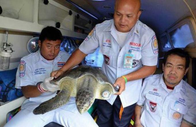 Une tortue sauvée après qu'un propriétaire d'un magasin l'a acheté à un client